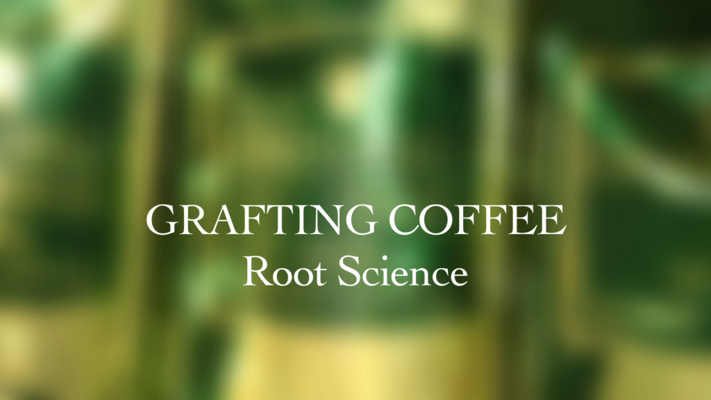 Grafting Coffee - Root Science