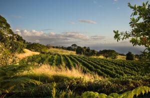 100% Kona Coffee from Hawaii
