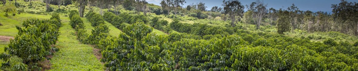 Kopiko Farms 100% Kona Coffee